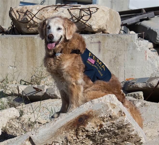 Bretagne the last 911 rescue dog