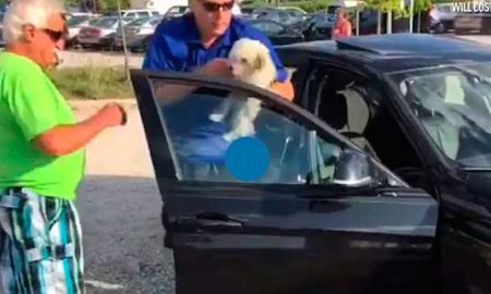 Dog rescued from hot car