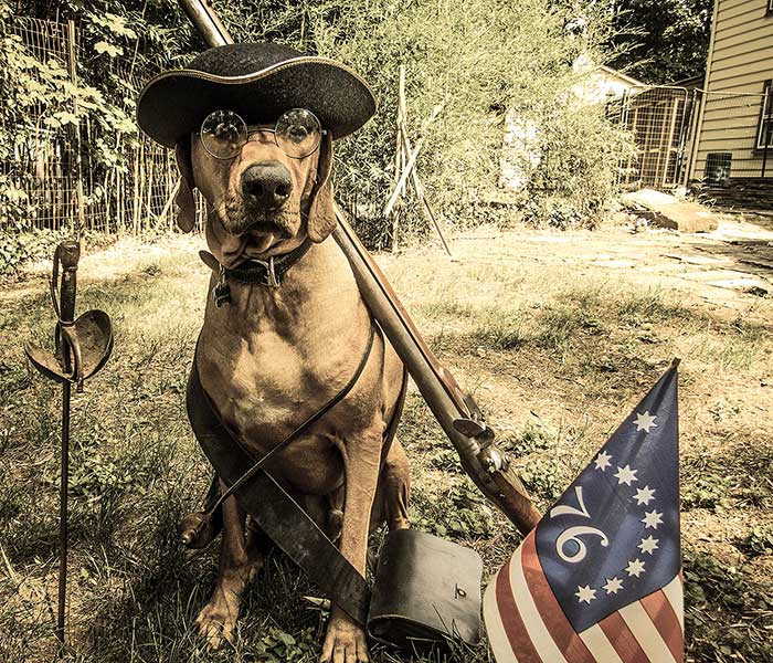 Colonial Dog