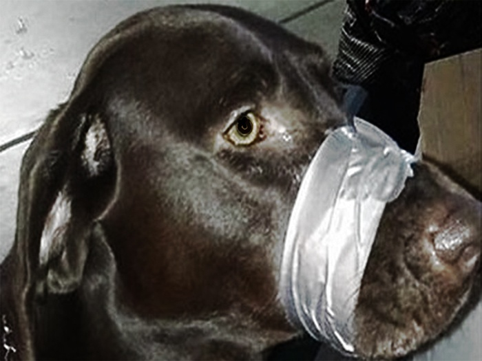 Dog duct tape muzzle