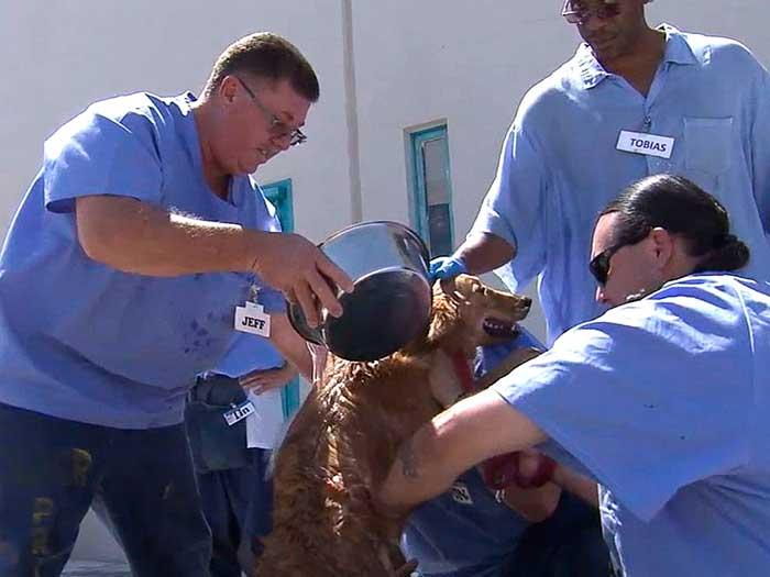 deaf dogs in prison