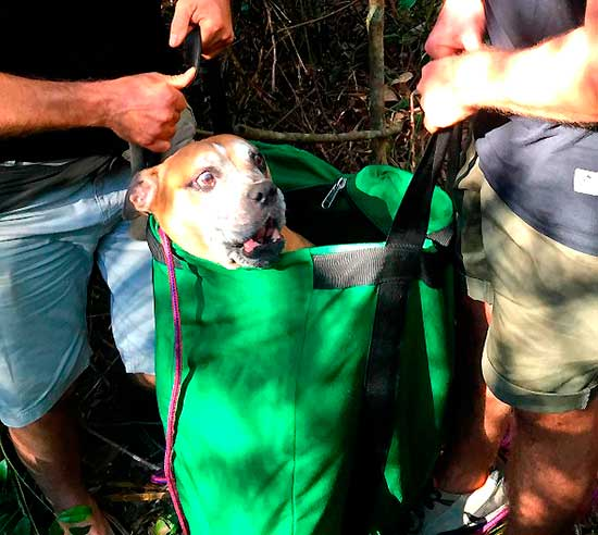 aussi-park-dog-rescue-11