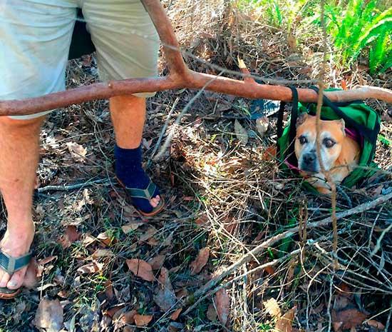 aussi-park-dog-rescue-13