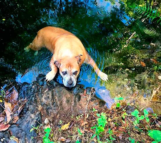 aussi-park-dog-rescue-2