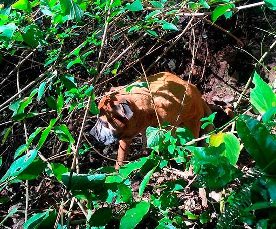 aussi-park-dog-rescue-3