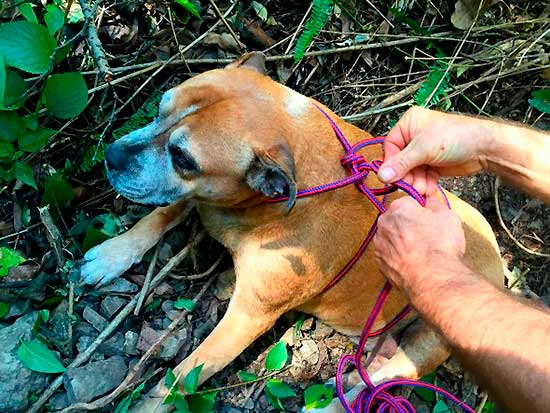 aussi-park-dog-rescue-5
