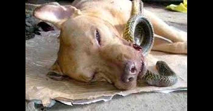 Cobra kills dog