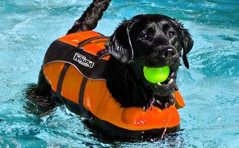 dog-lifejacket