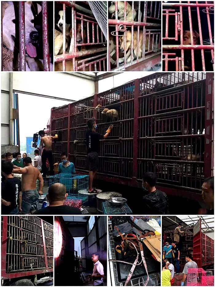 China dogs saved
