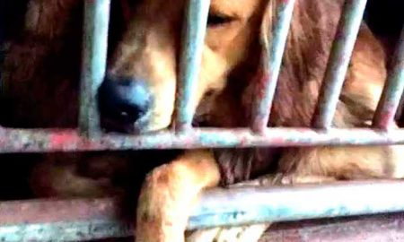 China dog rescue-feature