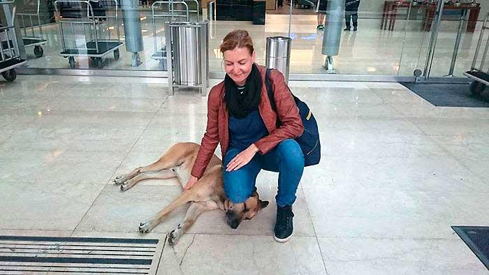 flight-attendant and dog 5