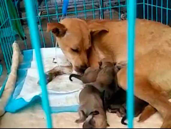Pups born