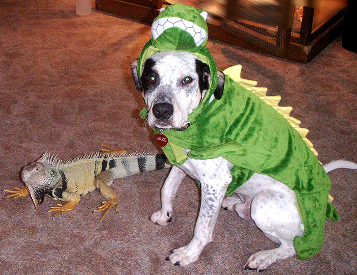 flickr Petful-LizardDog | License CC2.0