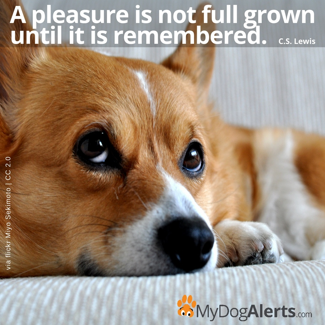 A pleasure is not full grown