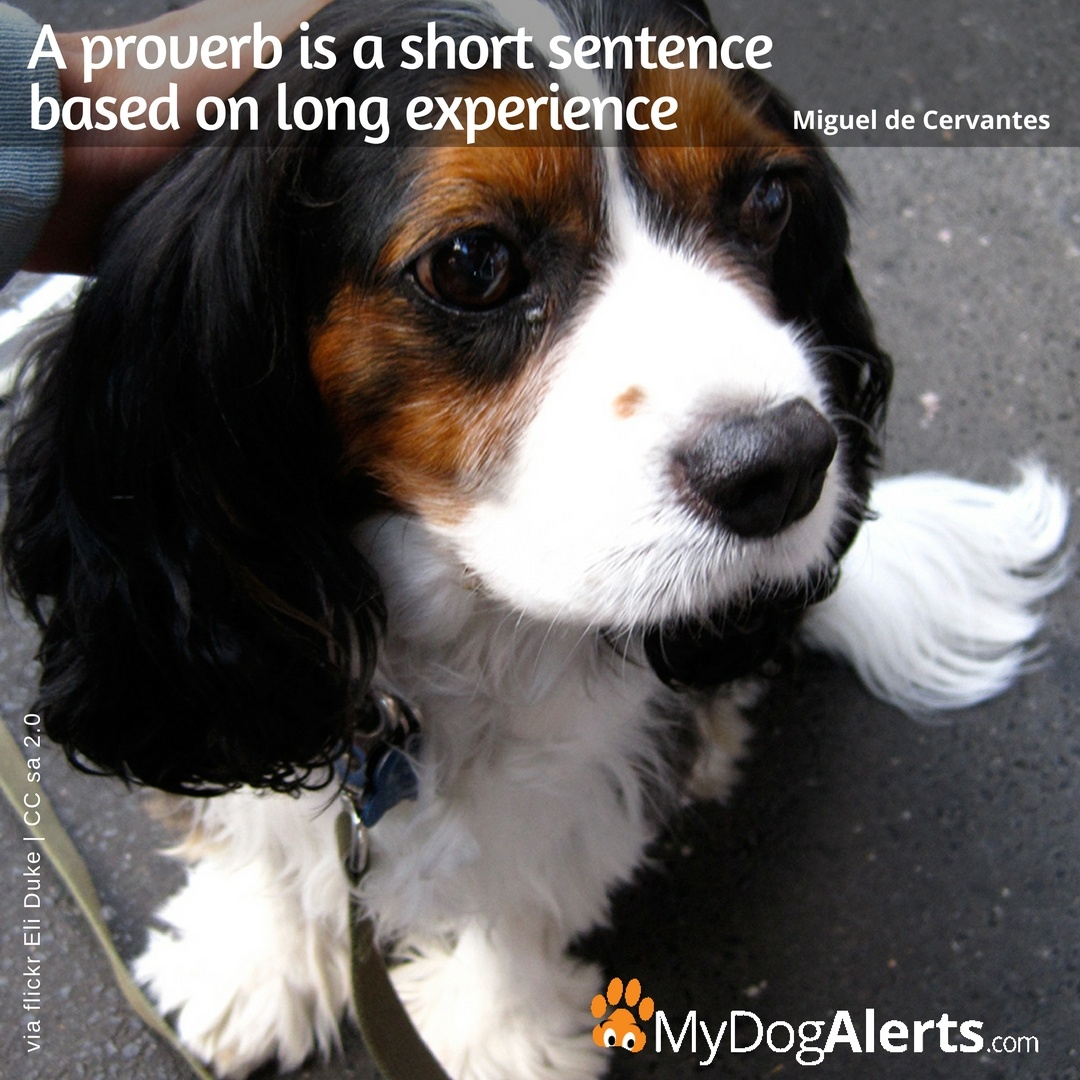 A proverb is a short sentence