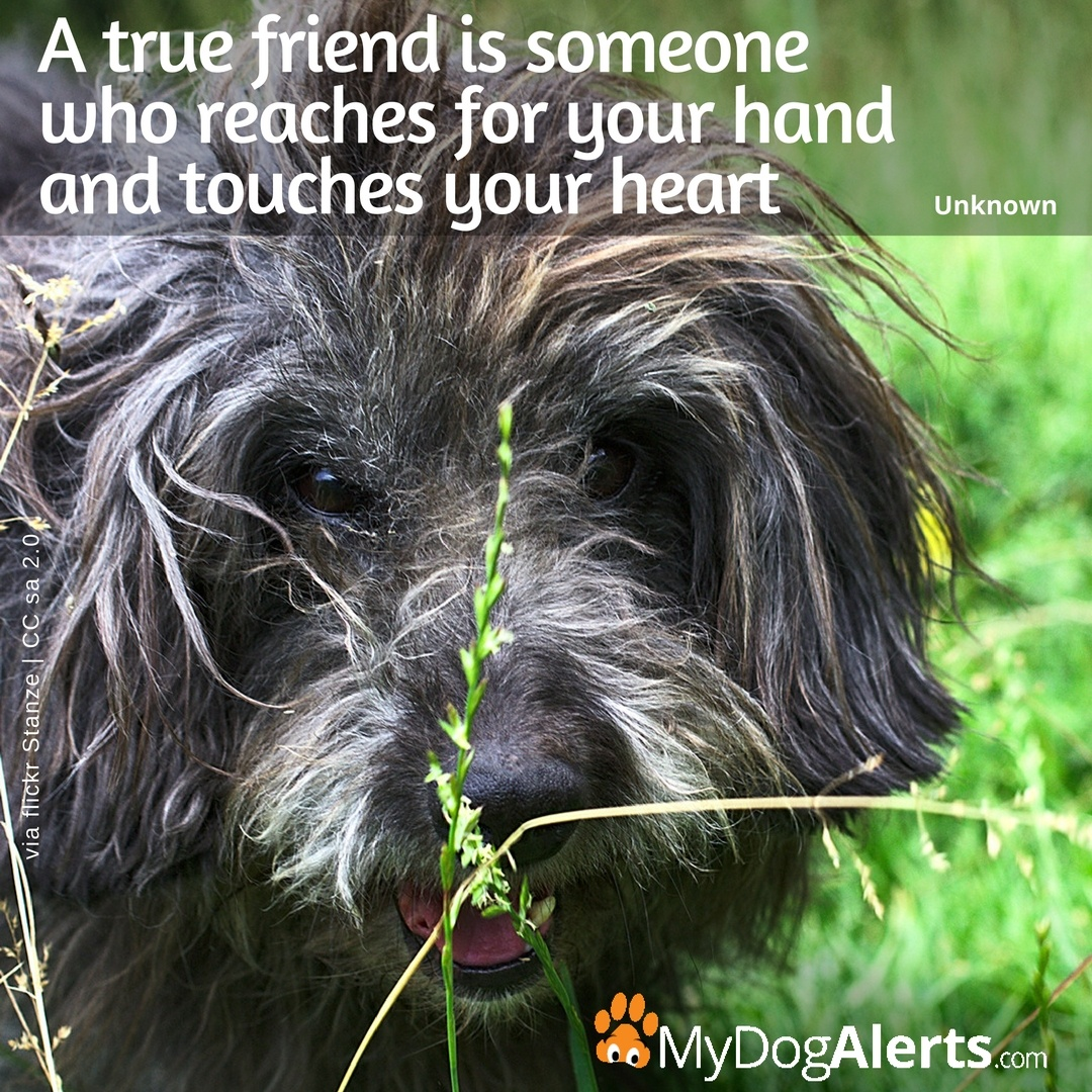 A true friend reaches your hand