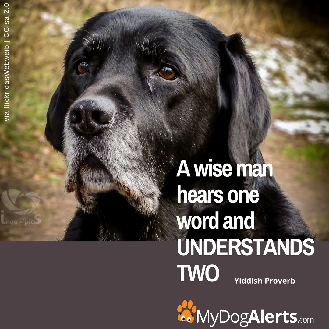 A wise man hears and understands