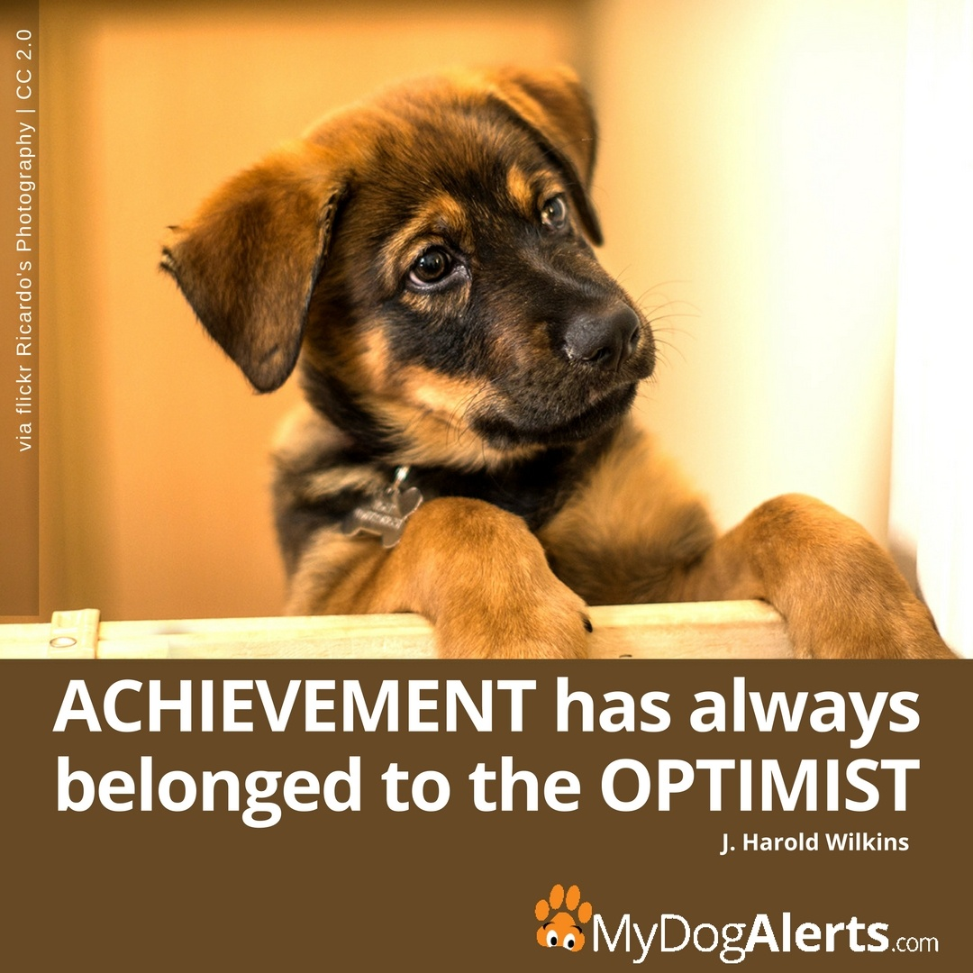 Achievement and the optimist