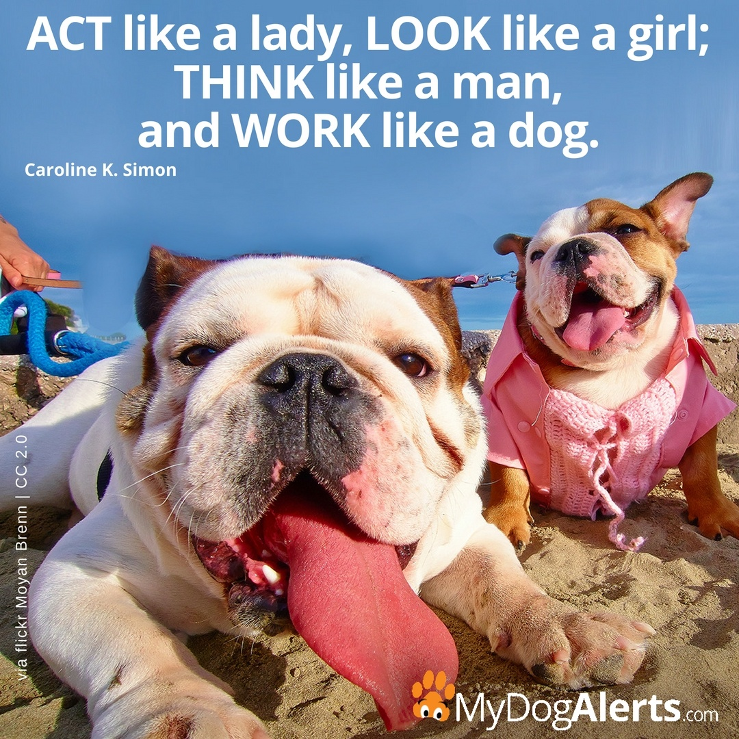Act like a lady work like a dog
