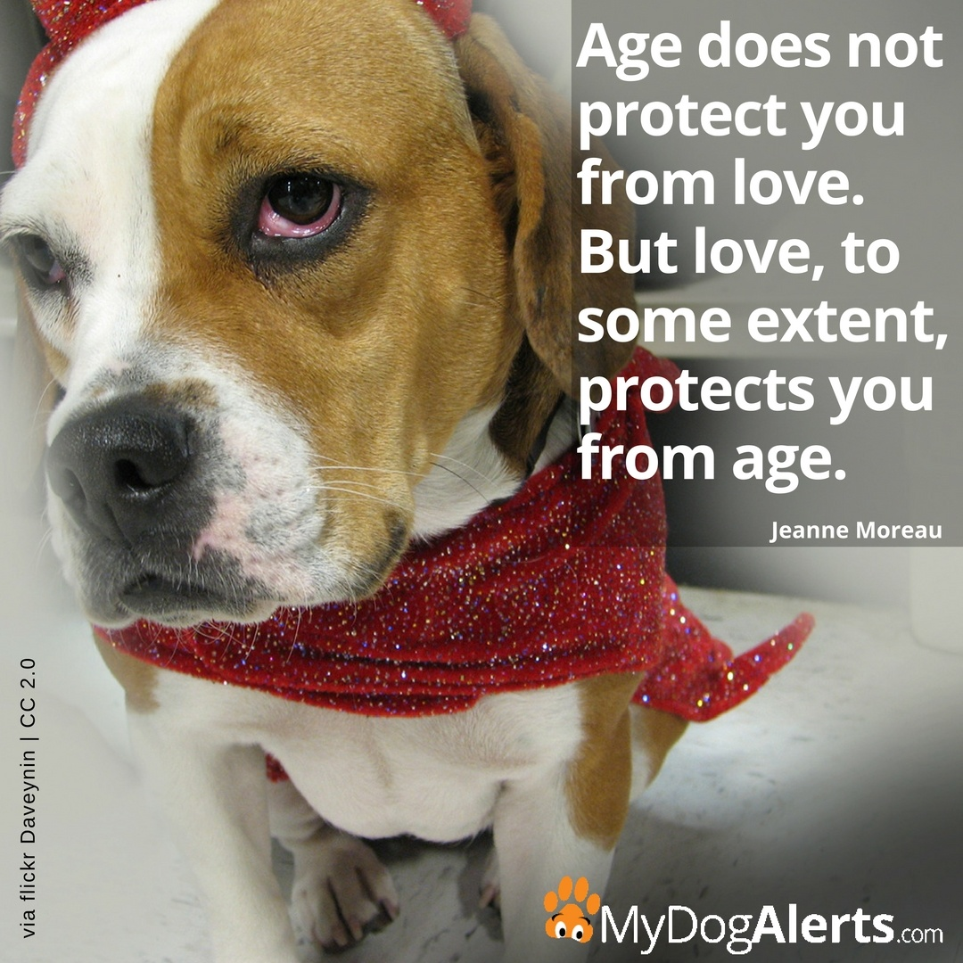 Age does not protect you from love