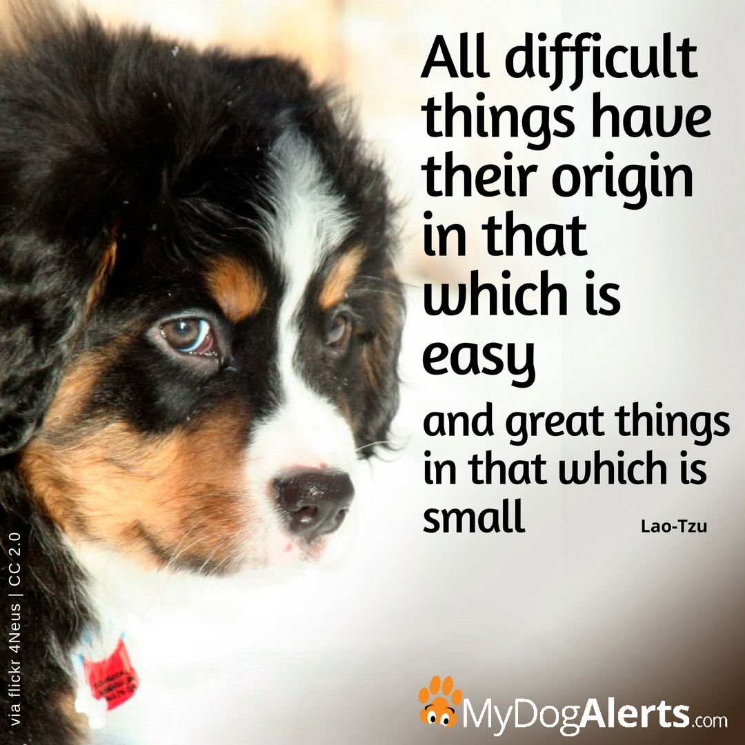 All difficult things origin in easy