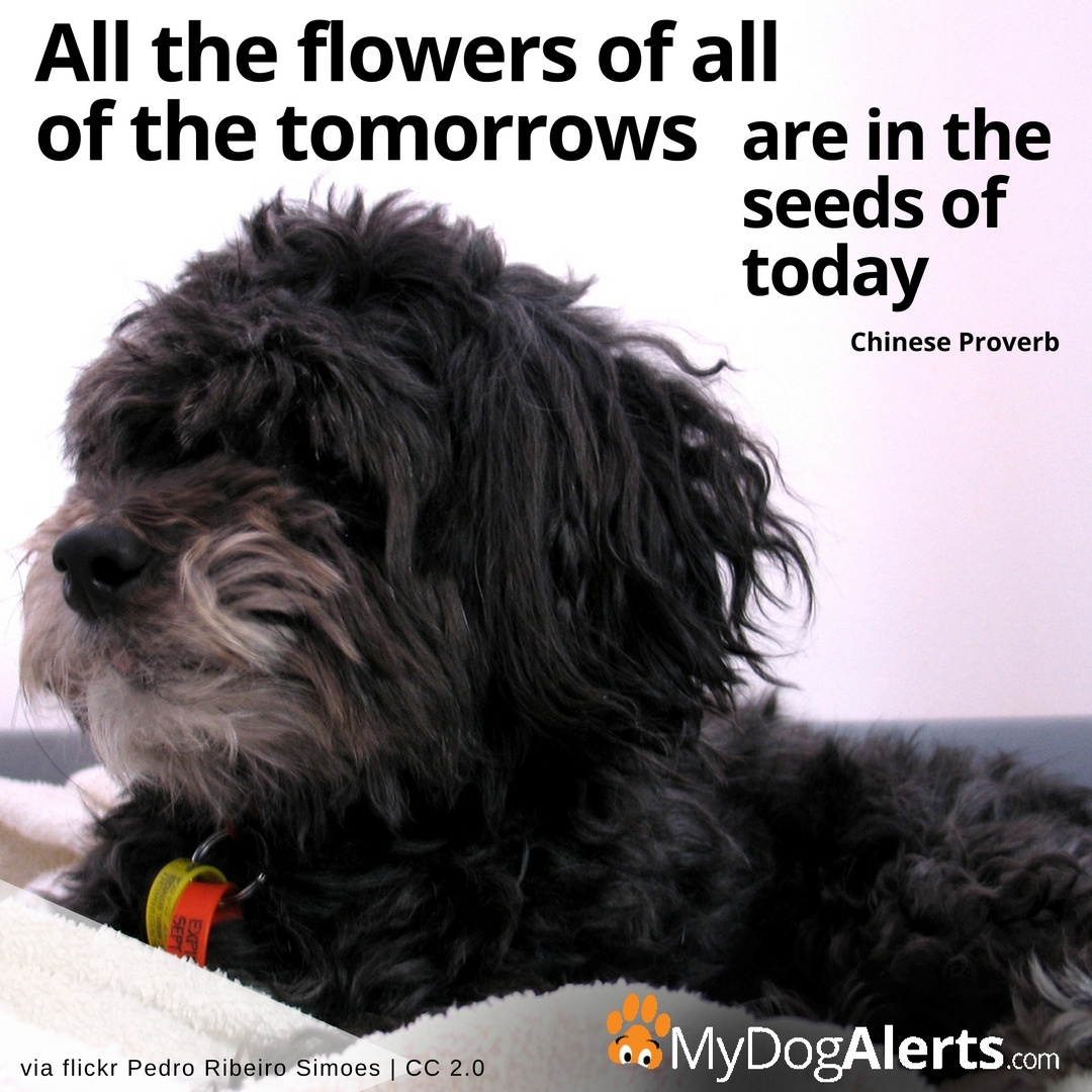 All the flowers of all of the tomorrows