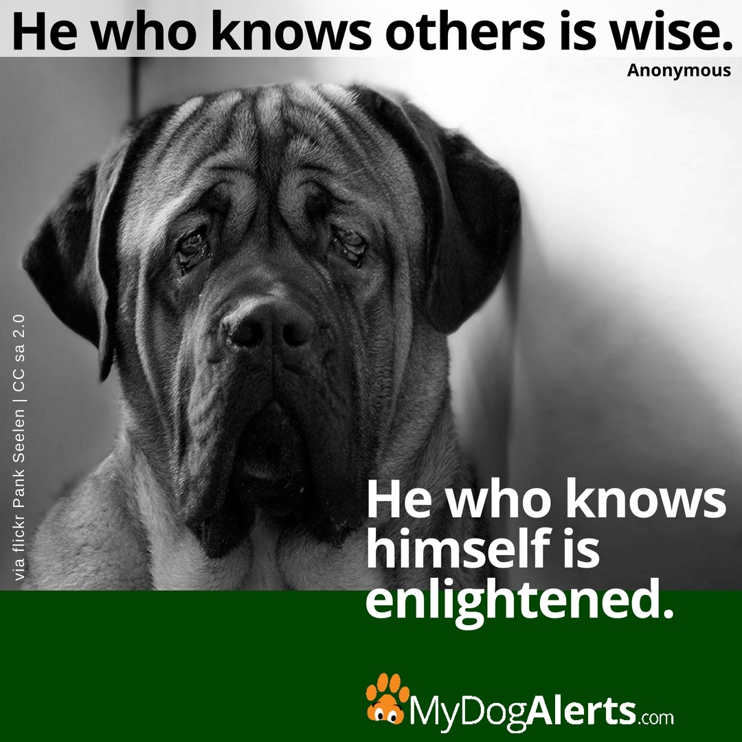 He who knows others is wise