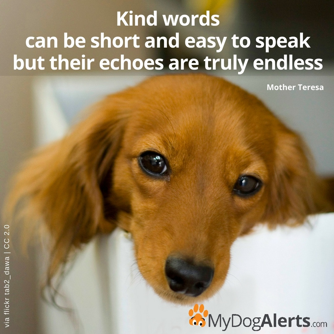 Kind words can be short and easy to speak