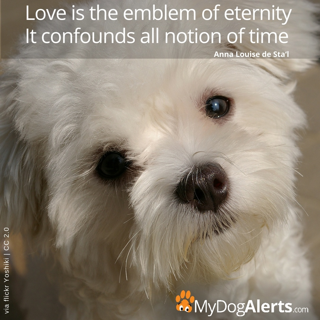 Love is the emblem of eternity