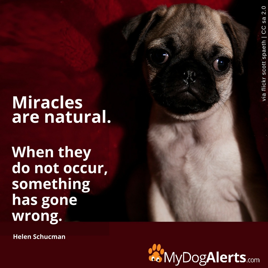 Miracles are natural