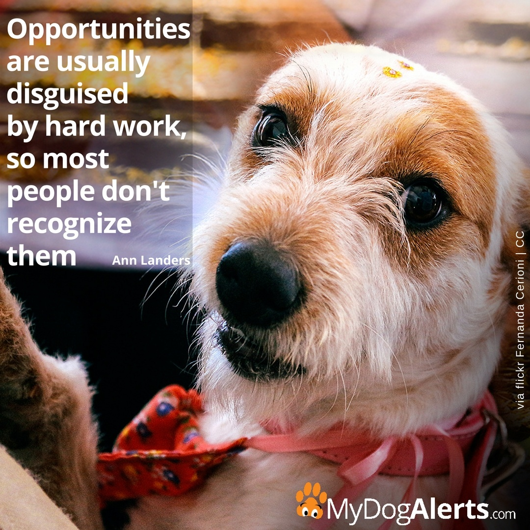 Opportunities are usually disguised by hard work