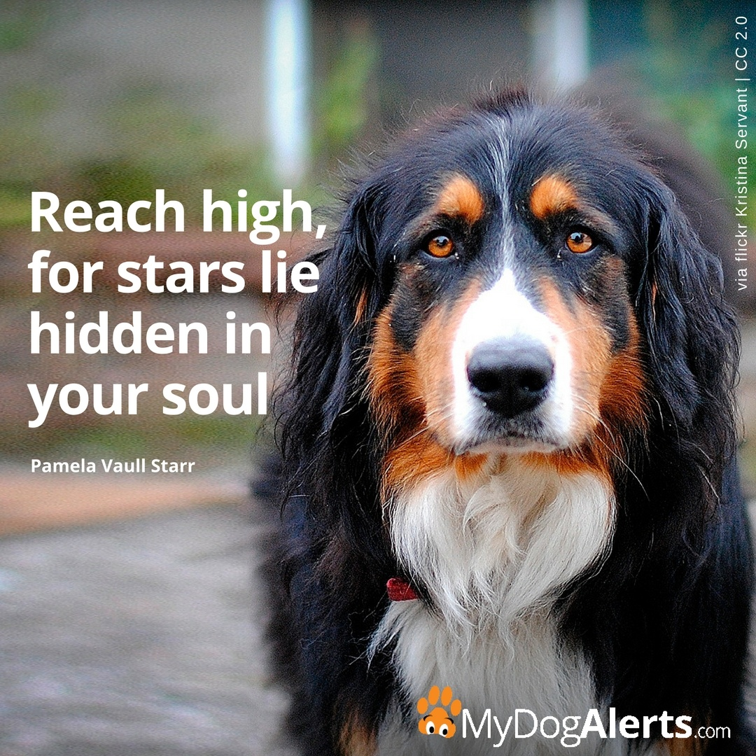 Reach high, for stars lie hidden in your soul