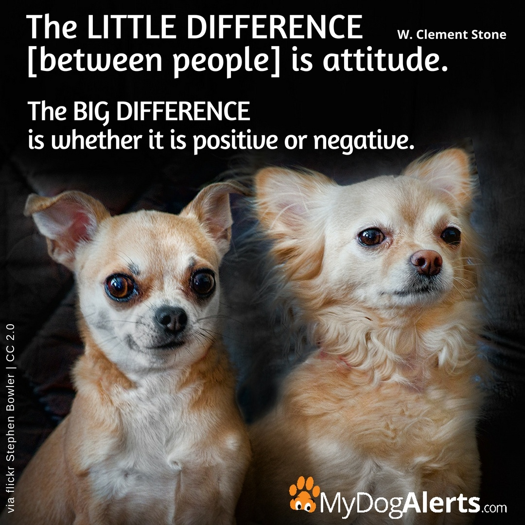 The litle difference is attitude