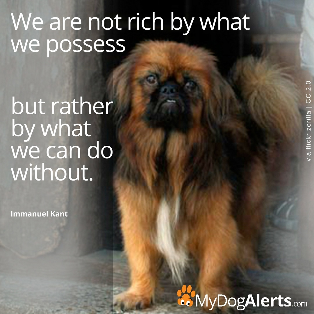 We are not rich by what we possess but rather by what we can do without