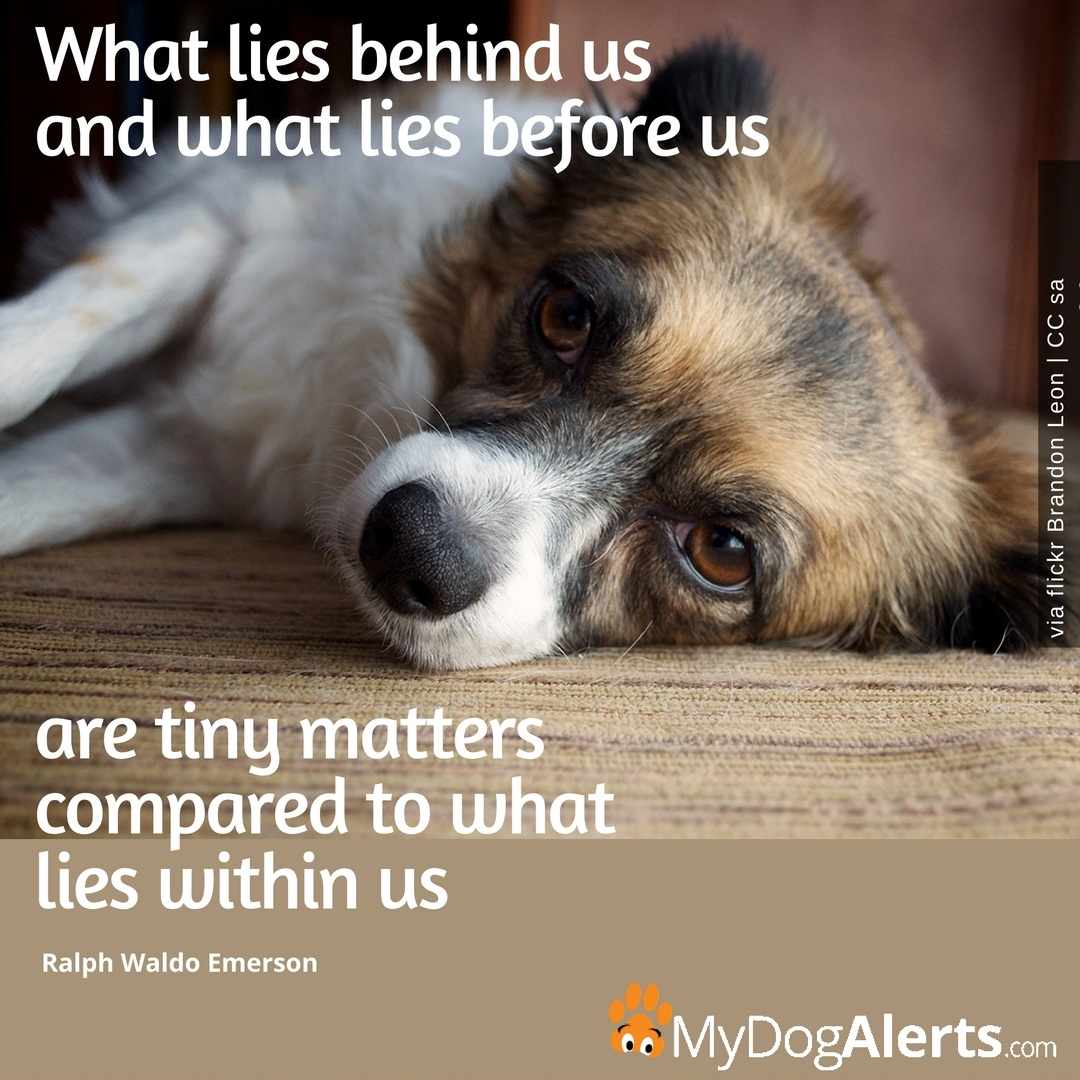 """What lies behind us and what lies before us are tiny matters"