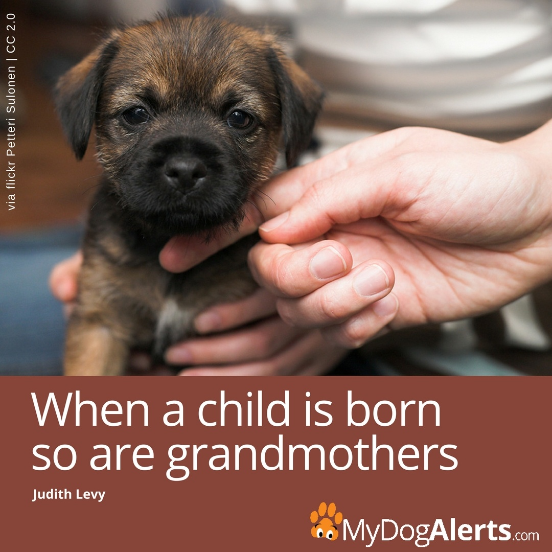 When a child is born so are grandmothers