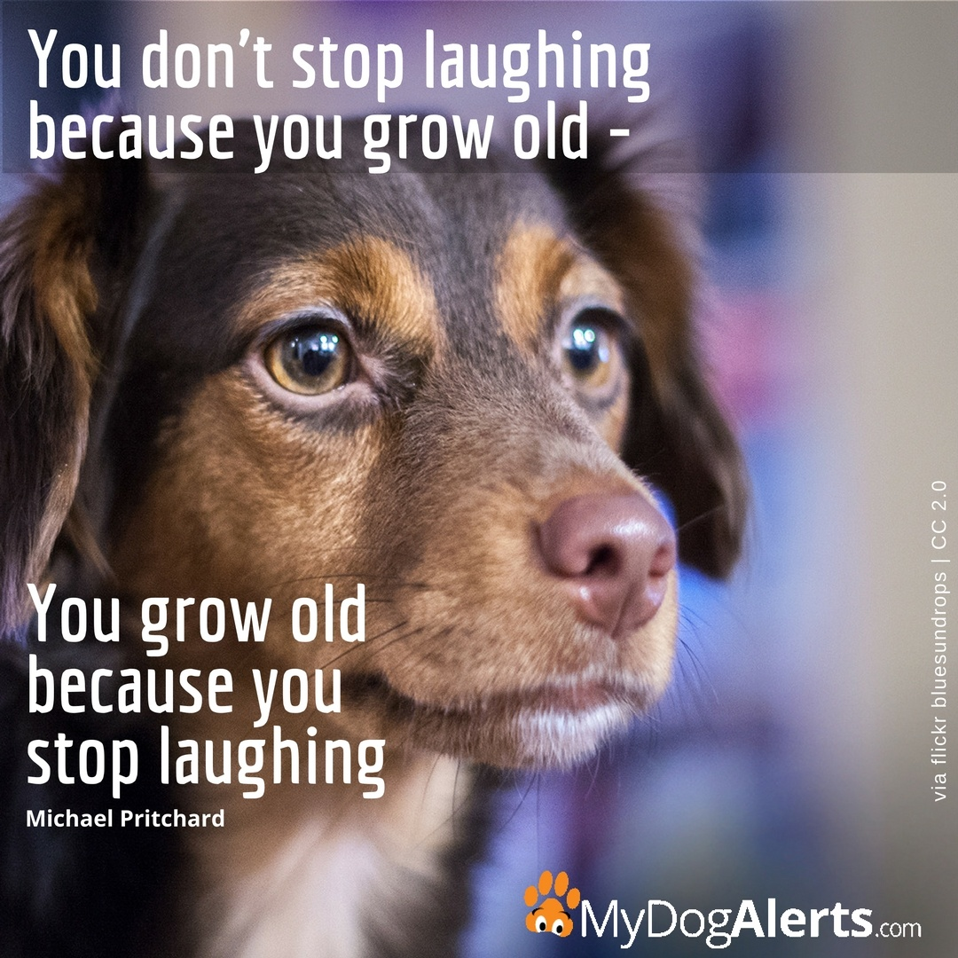 You don't stop laughing because you grow old